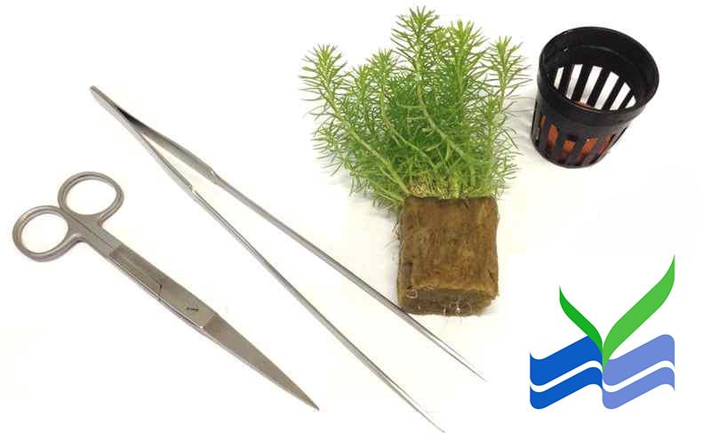 preparing-aquarium-plants-for-planting